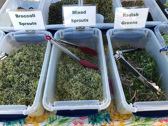 Broccoli Sprouts, Mixed Sprouts, Radish Greens